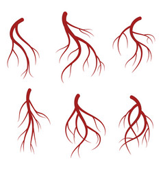 human veins red blood vessels realistic vector image