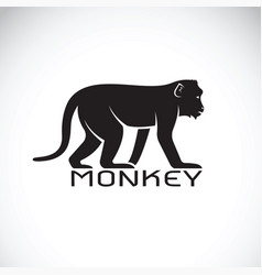 monkey on white background wild animal vector image
