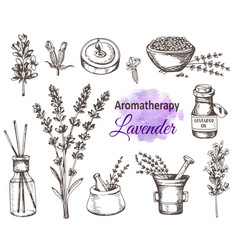 Vintage hand drawn lavender flowers vector