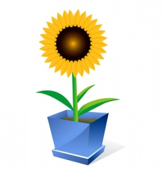 sunflower spot concept vector image
