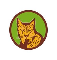 Iberian Lynx head front vector image
