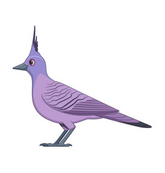 crested pigeon bird on a white background vector image