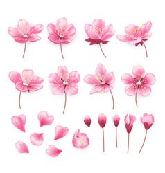 set beautiful cherry tree flowers isolated on vector image