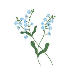Small blue forget-me-not flowers on stem vector