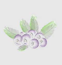 background acai berries with acai palm watercolor vector image