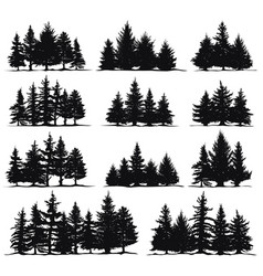 christmas trees silhouettes spruce nature fir vector image