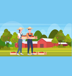 couple farmers holding red ripe apples crates man vector image