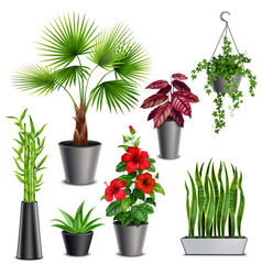 House plants realistic set vector