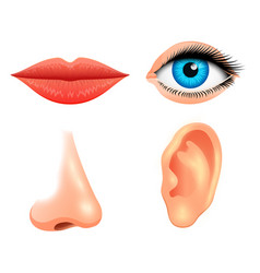 human biology sensory organs anatomy vector image