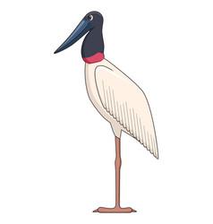 Jabiru stork bird on a white background vector