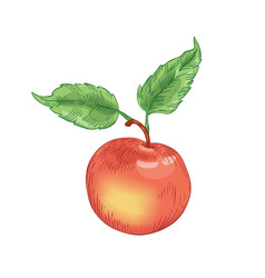 Red ripe apple with leaves hand drawn vector