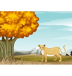 A cheetah near the big tree vector image