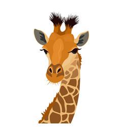 Giraffe head isolated on white african animal vector