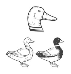 set of the duck isolated on white background vector image