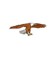 bald eagle swooping drawing vector image