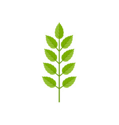 branch of green leave vector image