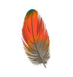 Hand drawn smoth orange tropical exotic bird vector