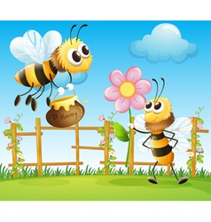 Two big bees in the garden vector image