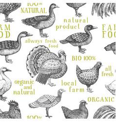 Farm animals background vintage vector