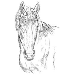 Horse portrait-14 vector