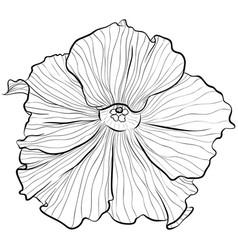 Petunias in line art style vector