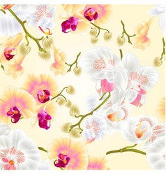 Seamless texture beautiful phalaenopsis orchids vector