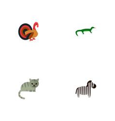 Set of zoology icons flat style symbols with zebra vector