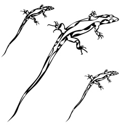 lizard silhoutte vector image vector image