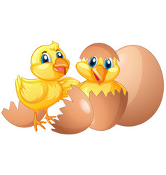 two little chicks hatching eggs vector image vector image