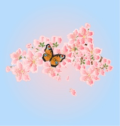 Butterfly and Cherry blossoms Spring background vector