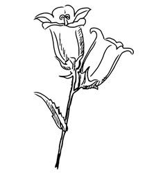 campanula vector image