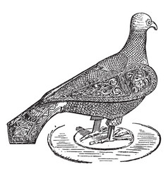 Columba is a metal bird vintage engraving vector