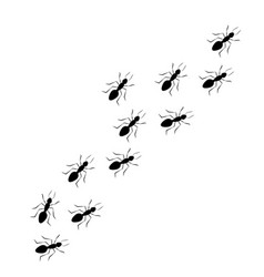 line worker ants marching vector image