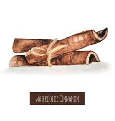 Watercolor hand drawn cinnamon vector
