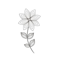 chrysantemum flower decoration line vector image