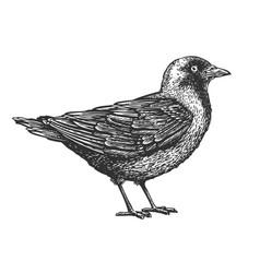 hand-drawn bird animal sketch vector image vector image