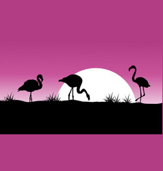 flamingo at sunset scenery silhouettes vector image vector image