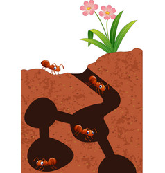 cartoon ants colony vector image