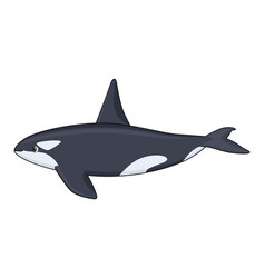 Killer whale fish on a white background vector