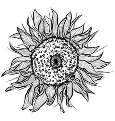 Sunflowers in line art style vector