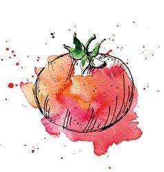 Watercolor of tomato vector image