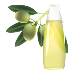 Olive branch and bottle of oil vector image vector image