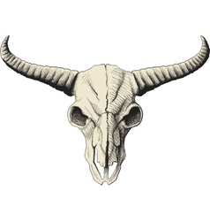 Buffalo skull vector