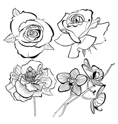poppy rose orchid flowers collection vector image vector image