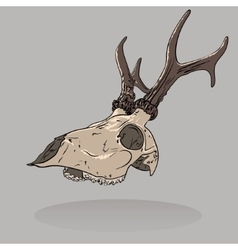 An isolated deer skull vector