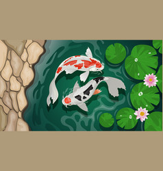 Couple koi fish swimming in pond vector