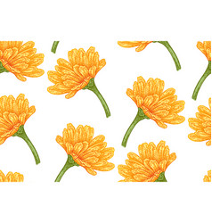 Seamless botanical pattern with calendula flowers vector