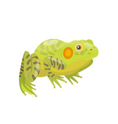 Frog cartoon tropical green animal cartoon nature vector