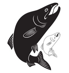 fish humpback vector image