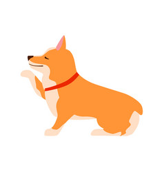 happy cute dog welsh corgi puppy sits and gives vector image